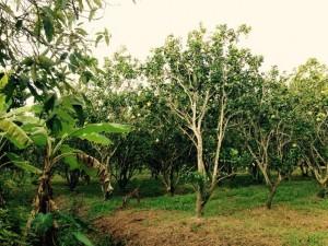 Mekong Eco Tour